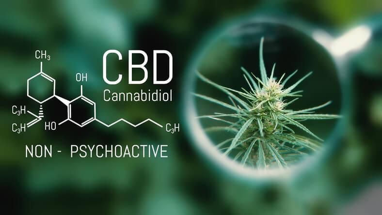 CBD na schizofrenie